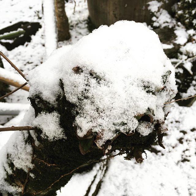 梅の木も真っ白。でも花芽は確実に膨らんできています♪#sudach #蘇大地 #田舎あるある #田舎暮らし #田舎 #雪 #雪景色 (Instagram)
