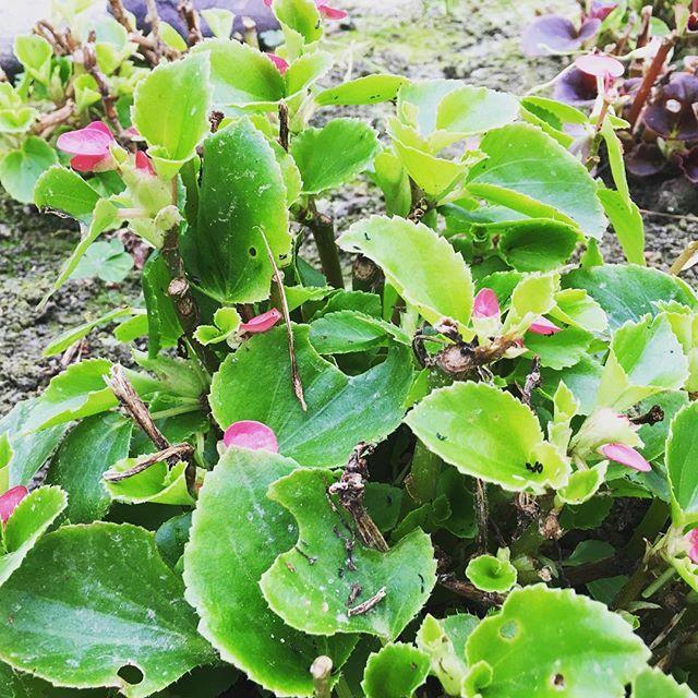 だいぶ、雪が溶けました️久しぶりの青空が!!#sudach #蘇大地 #田舎あるある #田舎暮らし #田舎 #植物 (Instagram)