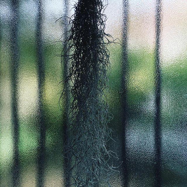 窓辺のエアープランツがキレイ。雪からの一転、暖かい日です♪#sudach #蘇大地 #田舎暮らし #田舎あるある #田舎 #エアープランツ #観葉植物 #観葉植物のある暮らし (Instagram)