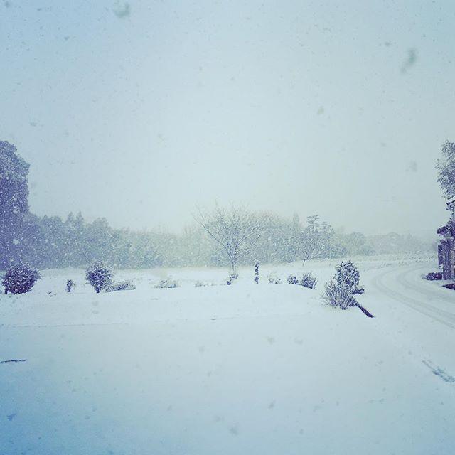 一面の雪景色!今年は雪が多いですねえ️#sudach #蘇大地 #田舎あるある #田舎暮らし #田舎 #雪 #雪景色 #snow (Instagram)
