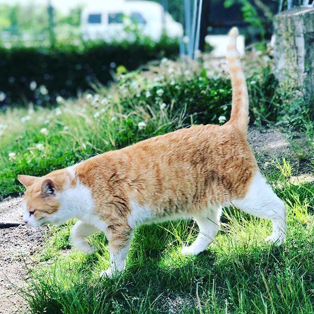 ネコ日和🐈#ネコ #猫 #猫好きな人と繋がりたい #sudach #蘇大地 #ねこ #ねこ部(Instagram)